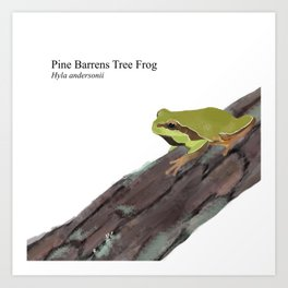 Pine Barrens Tree Frog (Hyla andersonii) on Pitch Pine Log Art Print