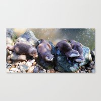 otters Canvas Prints featuring Otters by Shalisa Photography
