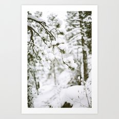 Snowy Branch Art Print