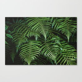 Dark Fern Canvas Print