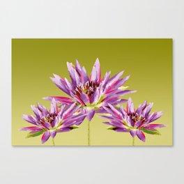 Lotos Flowers violet Canvas Print