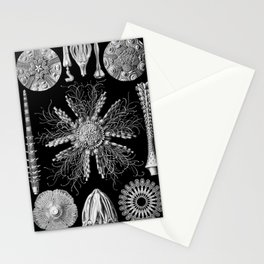 Sand Dollars (Echinidea) by Ernst Haeckel Stationery Cards