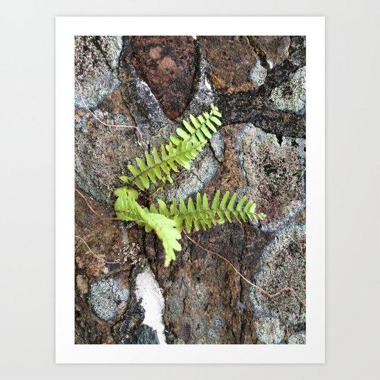 Fern Plant, Stone Wall, Caribbean Art Print