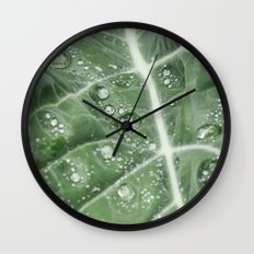 Rain water on a Purple Cauliflower leaf. Norfolk, UK. Wall Clock