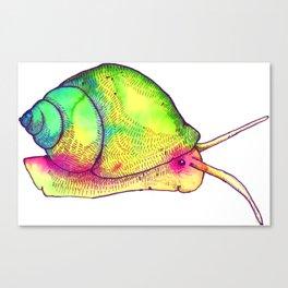 Watercolor Snail Canvas Print