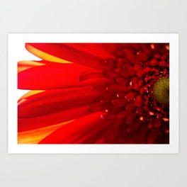 Red Daisy Macro Photography Art Print