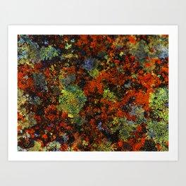 Orange Lichen   Artist: Nick Clements Art Print