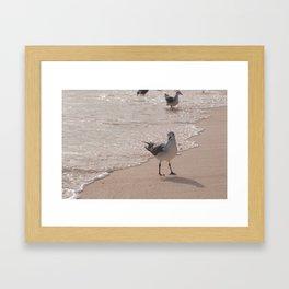 seagul Framed Art Print