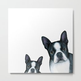Dog 128 Boston Terrier Dogs black and white Metal Print