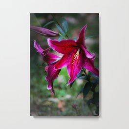 Ginnie's Asiatic Lily Metal Print
