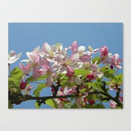 pear blossom III Canvas Print
