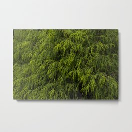Evergreen Shrub Metal Print