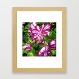 Purple bee Framed Art Print