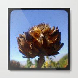TTV Winter flower at Fort Mason, San Francisco Metal Print