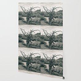 Dead Tree Wallpaper
