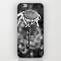Wilted Flower iPhone & iPod Skin