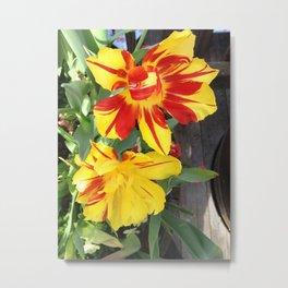 100,000 Florin Flowers Metal Print