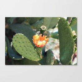 Botanical Flower Cactus Canvas Print