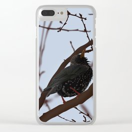 Starling bird illustration Clear iPhone Case