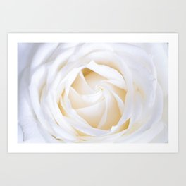White rose flower Art Print