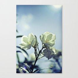 sunkissed honeysuckle Canvas Print