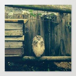 Smily owl Canvas Print
