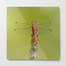 The red dragonfly Metal Print