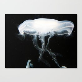 Jellyfish 5 Canvas Print