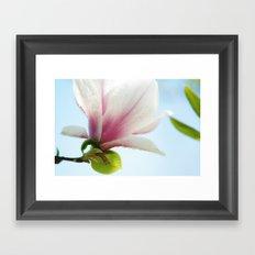 Magnolia Close-up Framed Art Print