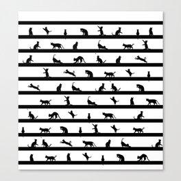 Funny cats Canvas Print