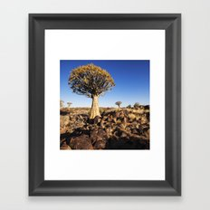Quiver Trees in Namibia Framed Art Print