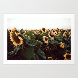 Sunflower field III Art Print