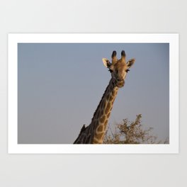 Giraffe and Oxpecker Art Print