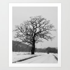 Winter Oak Art Print