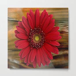 Red Daisy Abstract Metal Print