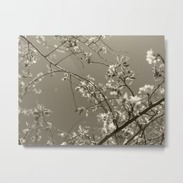 Spring blossoms #03 Metal Print