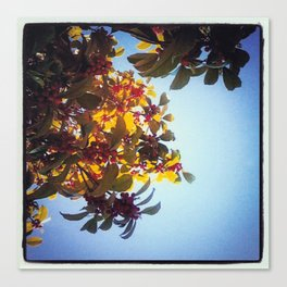 The Red Berry Tree (An Instagram Series) Canvas Print