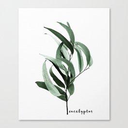 Eucalyptus - Australian gum tree Canvas Print