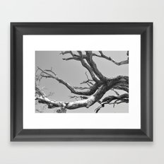 Driftwood Ladder B/W Framed Art Print