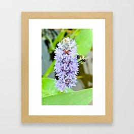 bee and flower relation Framed Art Print