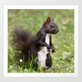 Squirrel Nager Cute Art Print