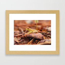 Cuban Tree Frog Framed Art Print