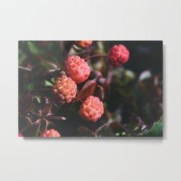 Bright Berries II - Macro Nature Photography Metal Print