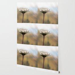 Sunrise daisy Wallpaper