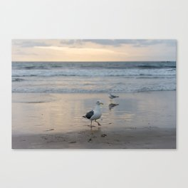Seymour, King of The Seagulls Canvas Print