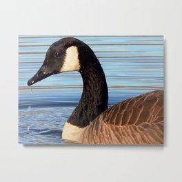Dribble goose Metal Print