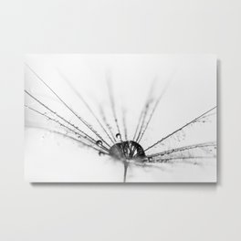 Abstract Beauty a wet Dandelion Seed Metal Print
