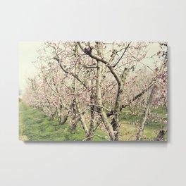 Peach Trees Metal Print