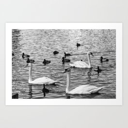 Bird Lake in The City Art Print