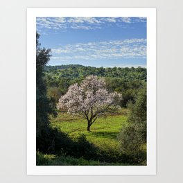An almond tree in flower in the Algarve countryside Art Print